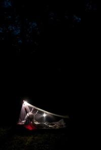 Nighttime in the meadow.
