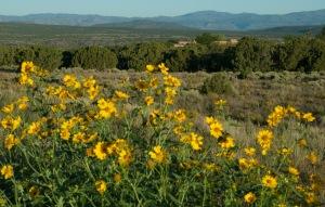 Early morning just outside Santa Fe, New Mexico